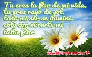 frases de amor con flores blancas