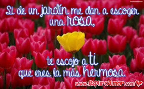 frases de amor con flores moradas y una amarilla en medio