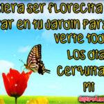 3 Frases de amor con flores para tu enamorada