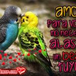 Imágenes de pájaros con bonitos mensajes de Amor