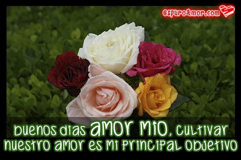 Cinco rosas de diferente color para enviar
