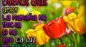 Imágenes de Buenos Días con Tulipanes
