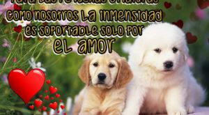 4 Imágenes de amor con perritos para decir te extraño