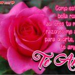 Frases de Amor con Bonitas Imágenes de Rosas para Enviar