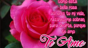 Rosas con la frase TE AMO
