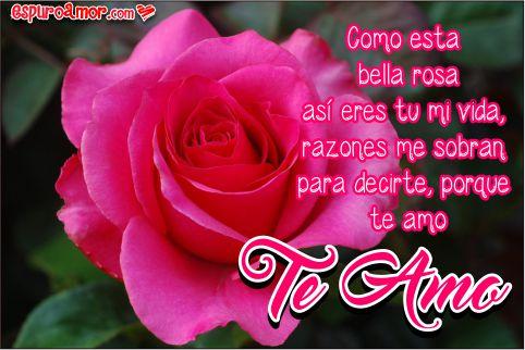 Brote maravilloso de una rosa
