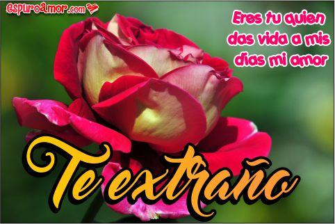 Ya Basta De Extrañar Su Amor Y Dale Lindas Rosas Con Frases