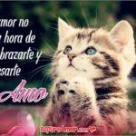 5 Imágenes para Decir Te Amo con Lindos Gatitos