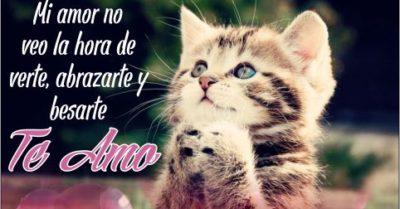 Imágenes para Decir Te Amo con Bonitos Gatos