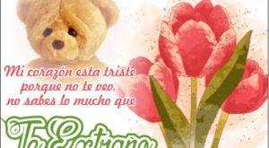 Flores de Tulipanes para decirle Te Extrañé Mucho