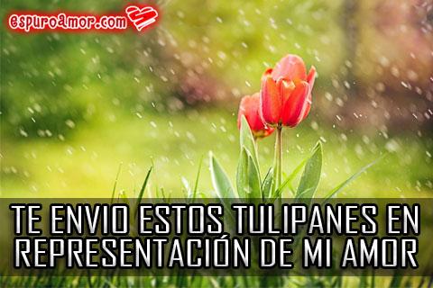 Dos tulipanes en plena lluvia