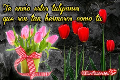 Maravillosos tulipanes rosas y rojos