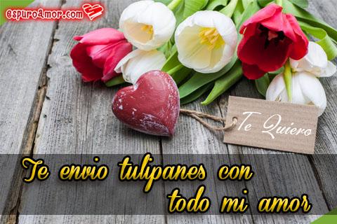 Tulipanes para decir te quiero