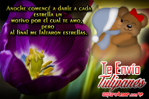 Imágenes de Ositos Abrazados con Te Envío Tulipanes Gratis