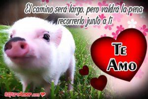 Frases de Te Amo con Bellas Imágenes de Tiernos Chanchitos