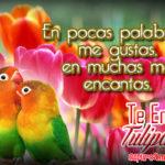 Imagenes de Loritos Cariñosos con Tulipanes para Enviar