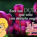 Imagenes de Tulipanes con Piropos de Amor para Enviar
