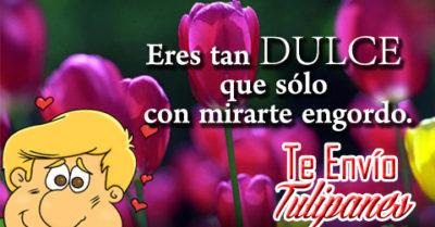 Imágenes de Tulipanes con Piropos de Amor para Enviar