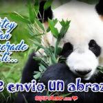 5 Imágenes de Tiernos Osos Panda con Te Envío Abrazo