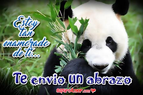 Osito panda con frase para enamorada