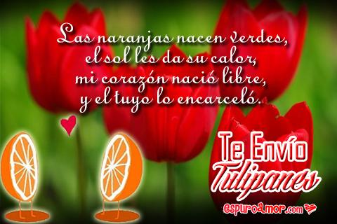 Dulces tulipanes