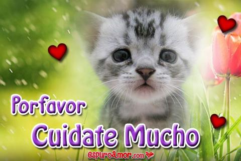 Tierno gatito plomito para enviar como saludo
