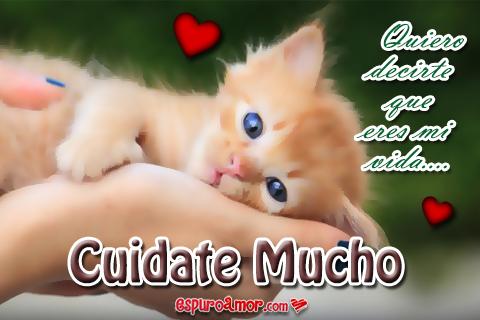 Gatito pequeño y frase de cuidate para un amor
