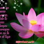 La Mejor Forma para Reflexionar en el Amor: Flores de Loto