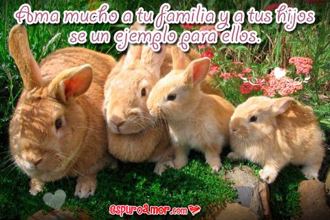 Una linda familia de conejitos