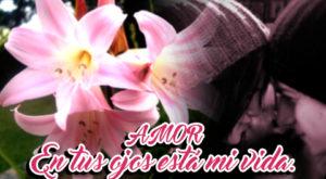 Dedica Flores de Azucenas para que la Conexión sea Verdadera