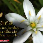 5 Lindas Flores De Azucenas con Frases de Amor