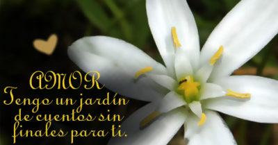 Lindas Flores De Azucenas con Frases de Amor