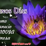 Imágenes Hermosas de Flores Loto con Buenos Días para Ella