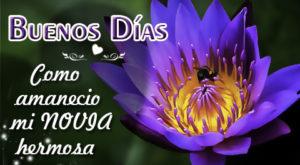 Imágenes De Flor De Loto