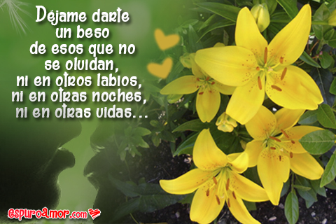 Frases románticas con lindas azucenas amarillas