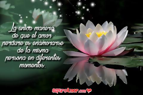 Hermosas Flores de Loto con Reflexiones de Amor