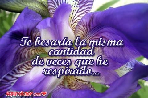 Frase romántica con flores de azucena
