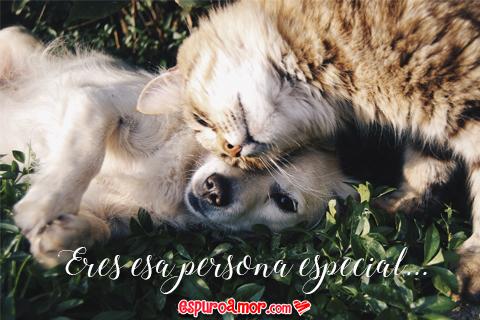 perro y gato cariñosos