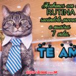 Imágenes de Amor con la Frase Te Amo de Lindos Gatos