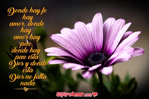 Imagenes De Flores Lindas Frases Naturales Llenas De Amor
