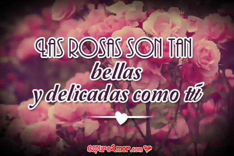 rosas bellas y delicadas como tu reina