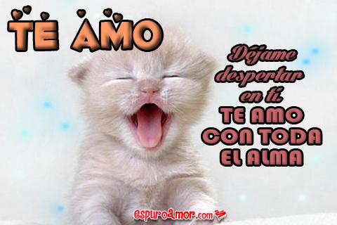 Gatito tierno para el amor de tu vida con frase romática