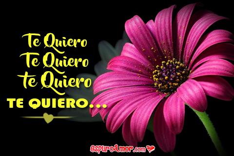 bonita flor para decir te quiero